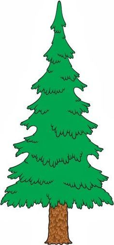 evergreen tree drawings.