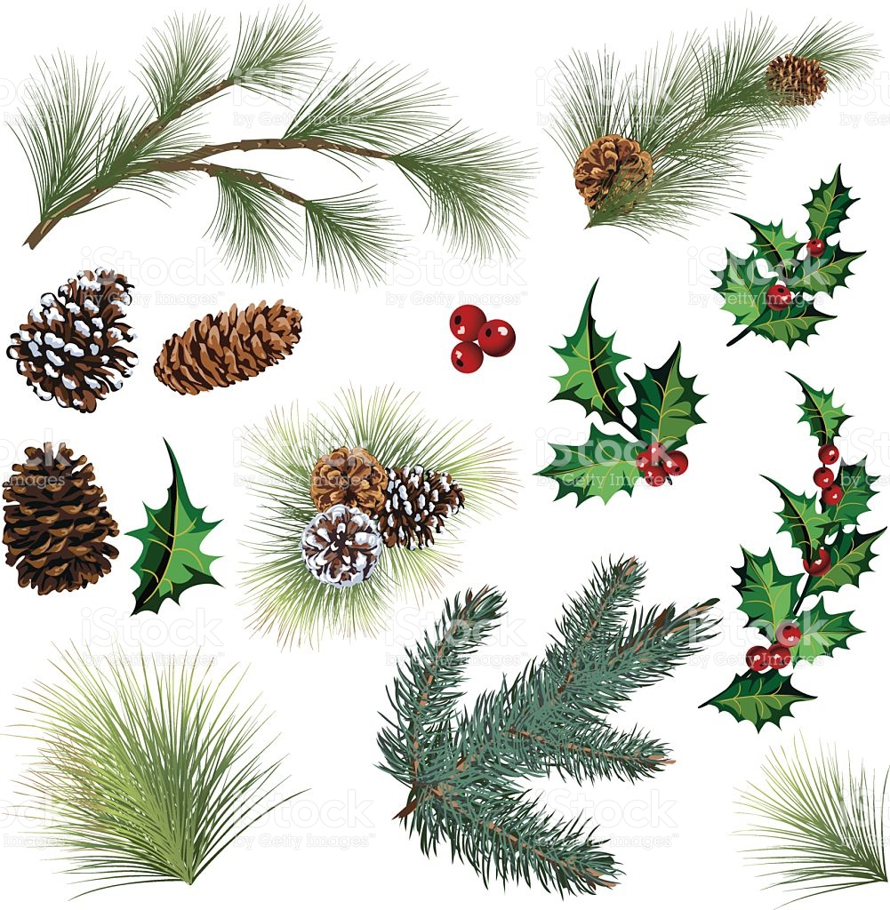 Evergreen Twig Elements And Holly Leaf With Berries Clipart stock.