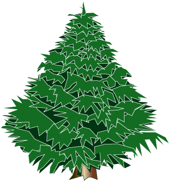 Picture Of Evergreen Tree.