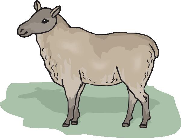 Clip art ewe.