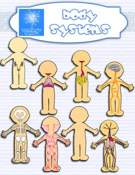 Human Body systems clipart BUNDLE {Science clip art}.