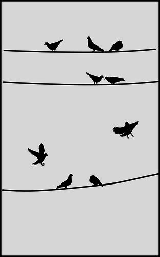 1000+ images about All Pigeons, All The Time on Pinterest.