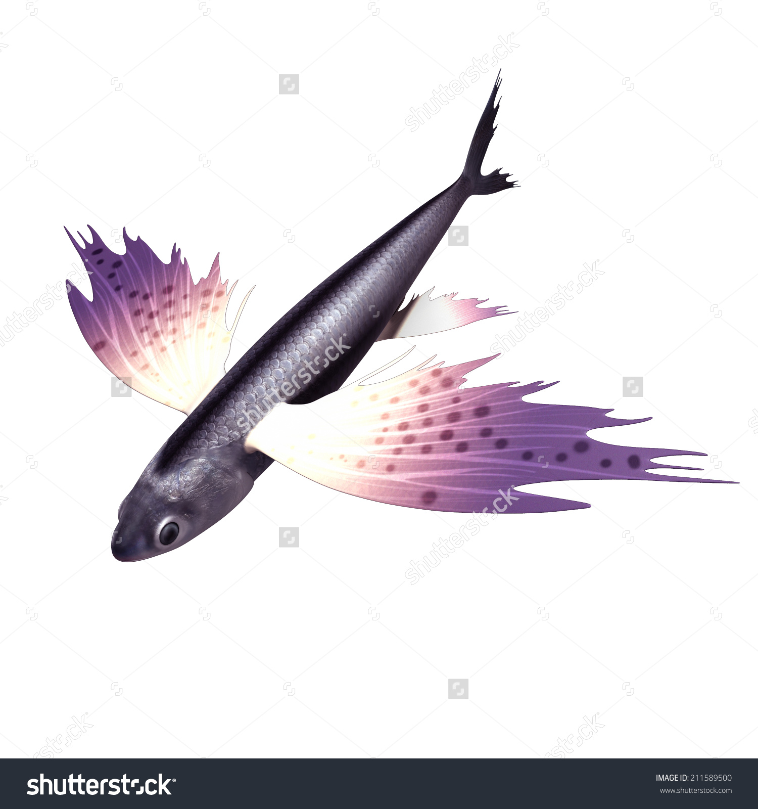 Exocoetus Flying Fish Stock Illustration 211589500.