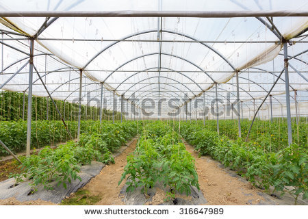 Modern Industrial Greenhouse Full Exotic Cactus Stock Photo.