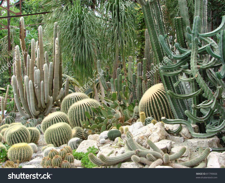 Exotic cactus greenhouse clipart #11