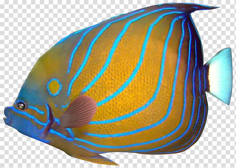 Angelfish Carassius auratus Red lionfish Tropical fish.