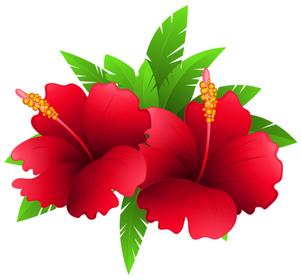 Exotic Flowers and Plant PNG Clipart Image.