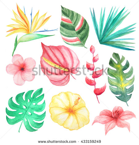 Set Watercolor Hand Painted Tropical Flowers Stock Illustration.