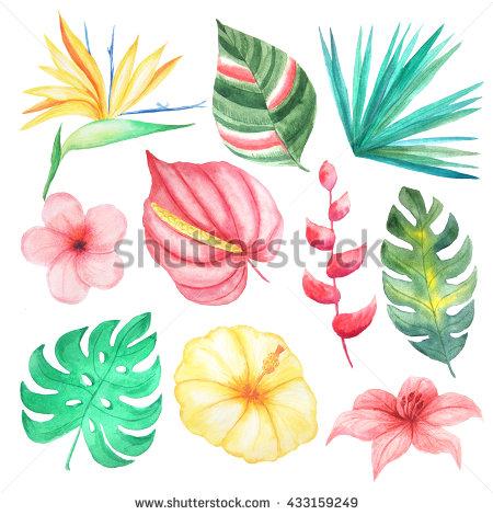 Exotic Flower Clip Art