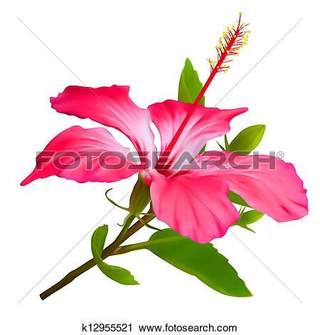 Clipart of Orchid vector flower illustration. Tropical exotic.