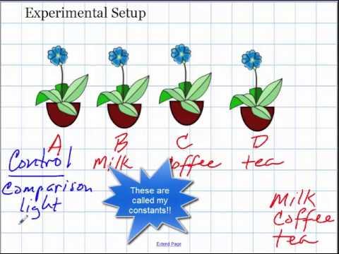 Scientific Method and Experimental Setup.