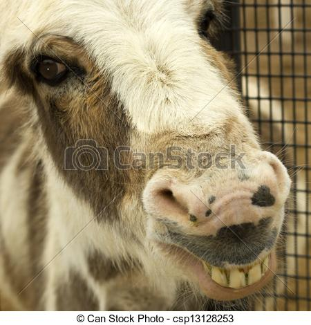 Stock Images of Smiling Donkey.