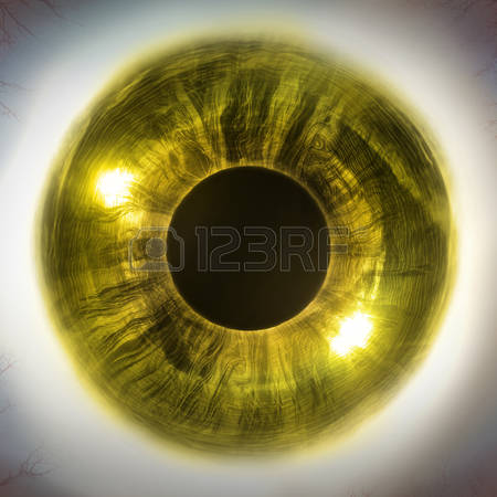 1,609 Human Eye Close Up Stock Vector Illustration And Royalty.