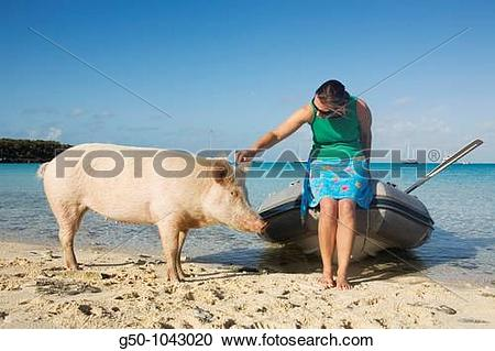 Stock Photography of Woman with wild pig on Big Majors Cay, Exumas.