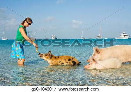 Picture of Woman with wild pigs on Big Majors Cay, Exumas, Bahamas.