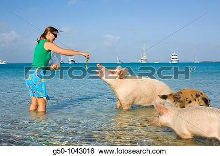 Stock Images of Woman with wild pigs on Big Majors Cay, Exumas.