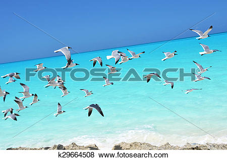 Pictures of Seagulls on the coast of Little Exuma, Bahamas.
