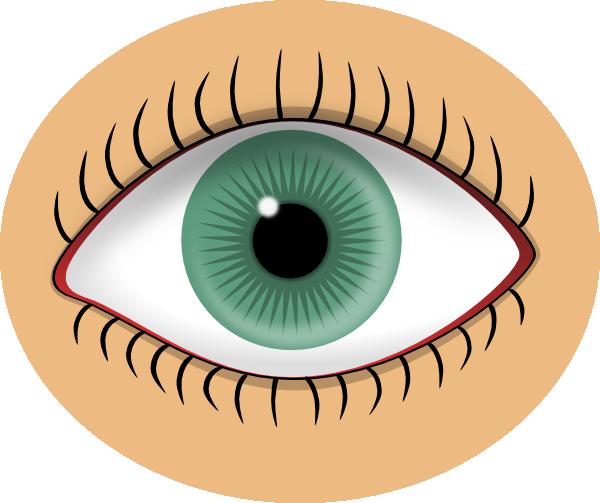 Looking Eyes Clip Art.