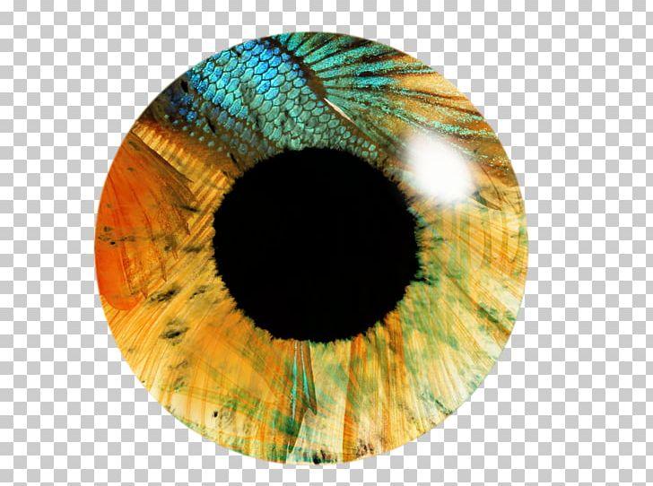 Eye Iris PicsArt Photo Studio Editing PNG, Clipart, Circle.