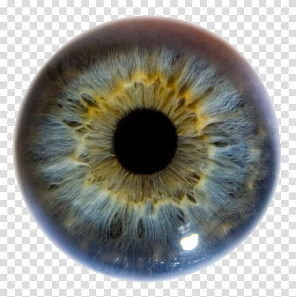 Iris Human eye Pupil Eye color, Eye transparent background.