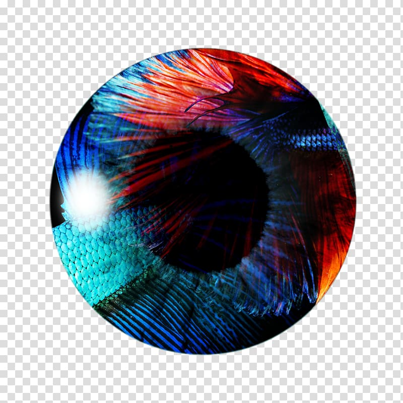 Round red and blue illustration, PicsArt Studio Color Eye.