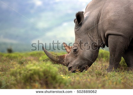 Africa Stock Images, Royalty.