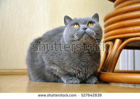 Fat Cat Stock Images, Royalty.