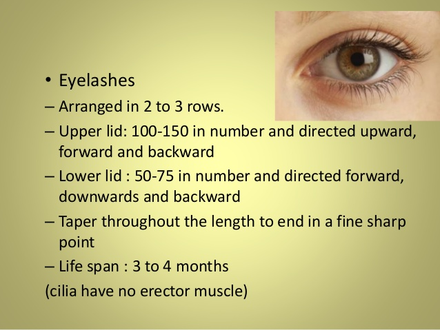 Anatomy of Eyelids & Its Clinical Correlations.