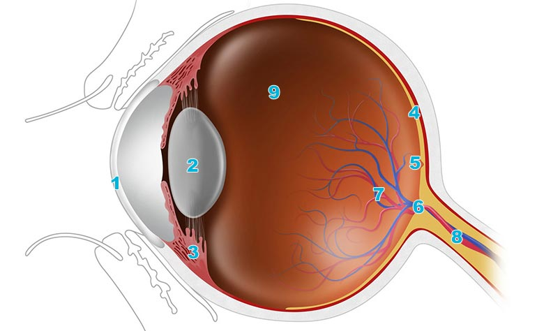 Eye Anatomy: An Easy Guide To Your Eye.