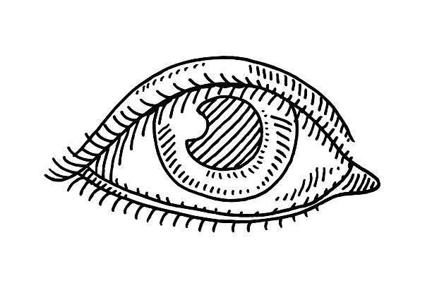 Eyes Sketch Clip Art, Vector Images & Illustrations.