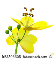 Fabaceae Illustrations and Clip Art. 13 fabaceae royalty free.