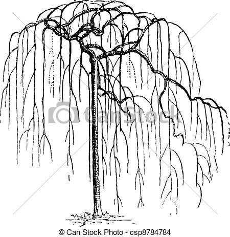 EPS Vector of Sophora Japonica or Japanese pagodatree.