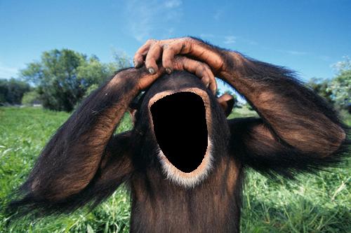 Monkey (№133).