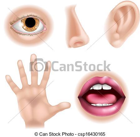 Clip Art Vector of Five Senses Body Parts.