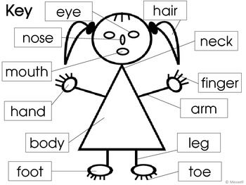 Face Parts Body Clipart.