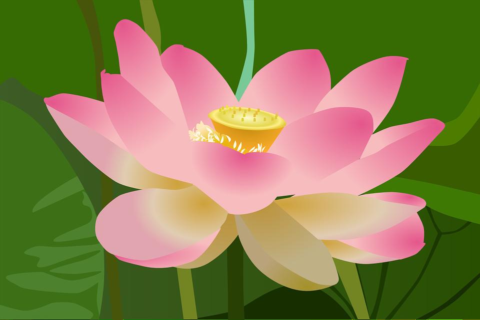 Free photo Beautiful Blossom Flower Beauty Bloom Lotus.