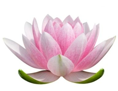 1000+ images about Lotus on Pinterest.