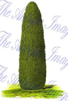 12 Pastel Hydrangea Clip Art, Flower graphics.