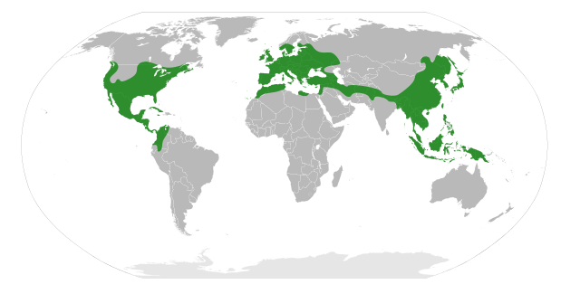 File:Fagaceae Distribution.svg.