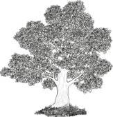 Fagaceae Clip Art.