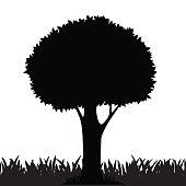 Fagaceae Clip Art, Vector Images & Illustrations.