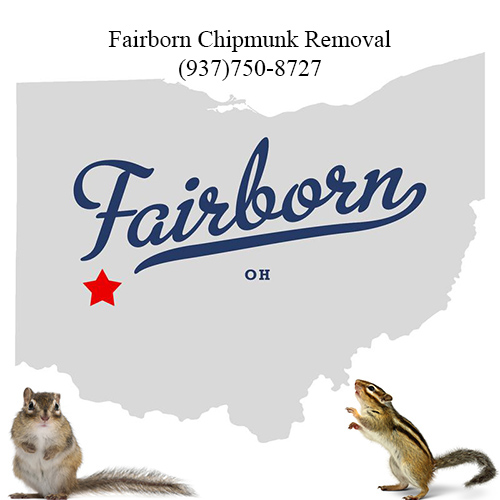 Fairborn chipmunk Removal.