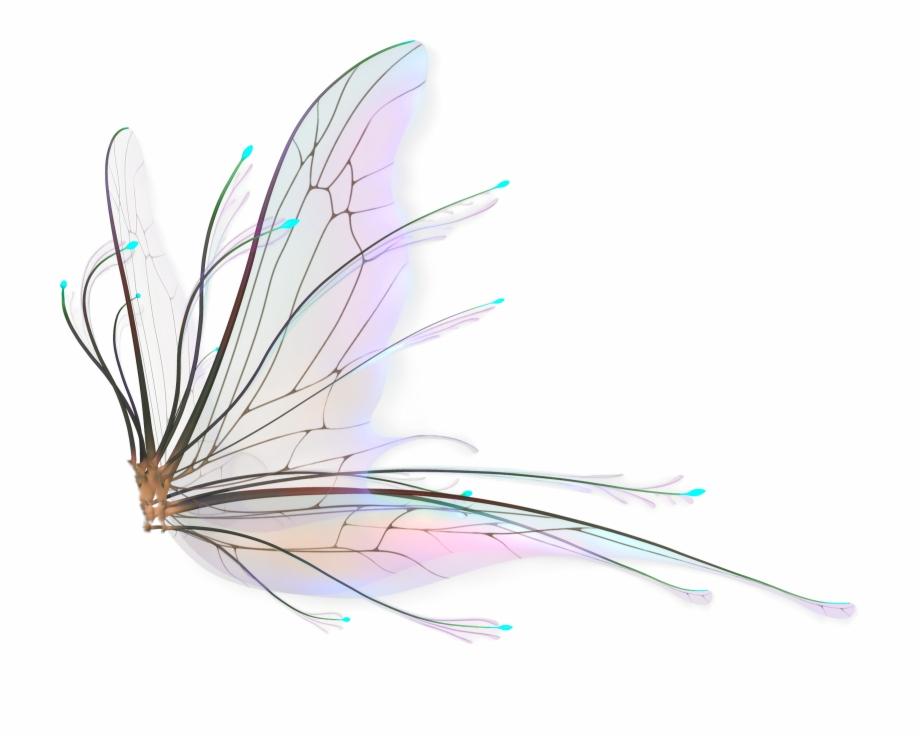 Fairy Wings Png Hd.
