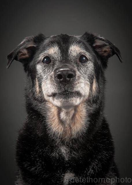 1000+ images about Raising a Happy Dog on Pinterest.