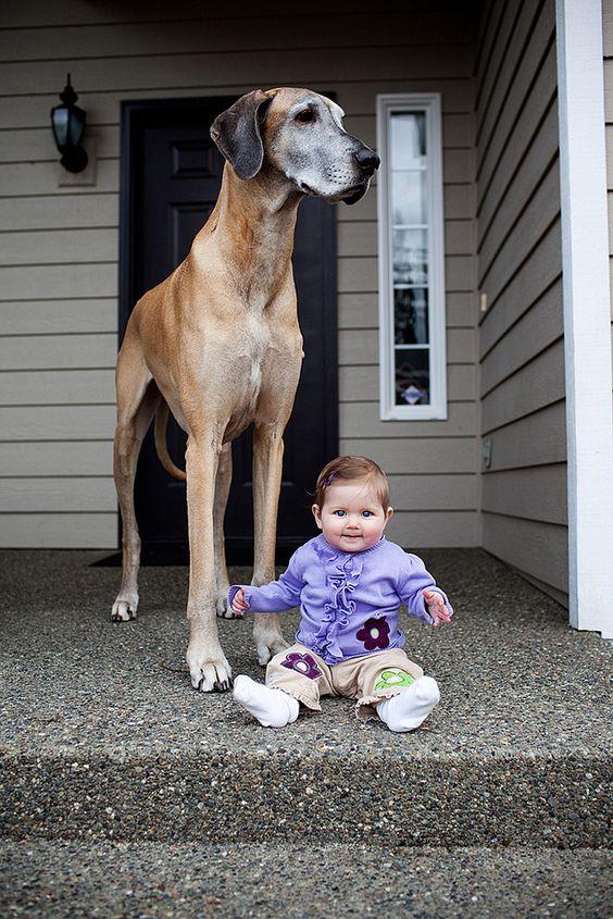 Lovely Kids and Their Big Loyal Dog Companions.