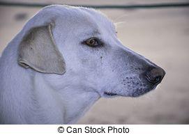 Stock Photo of Faithful dog eyes.