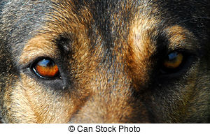 Stock Photo of Faithful dog eyes.
