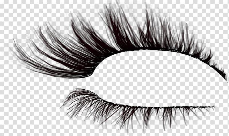 Eyelash Brush Drawing, others transparent background PNG.