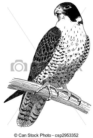 Clip Art of Peregrine Falcon.