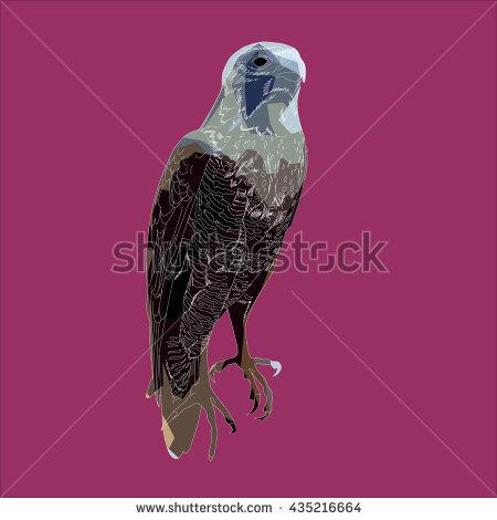 Falco Peregrinus Stock Vectors & Vector Clip Art.